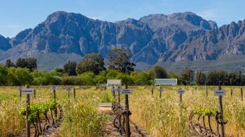 Cape Town (África do Sul) – Como é fazer a Rota dos Vinhos