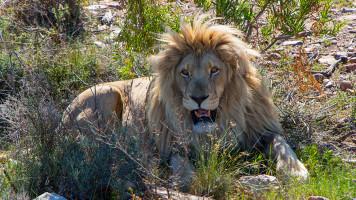 Cape Town (África do Sul) – 3 atrações imperdíveis da Cidade do Cabo
